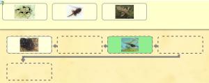 Etapy rozwoju żaby